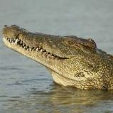 Krokodyl123